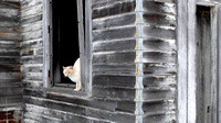 Schoolhouse Cat